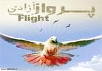پرواز آزادی
